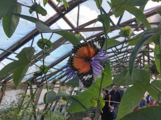 butterfly-world0123