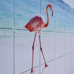 202-ixxi-photography-natuur-flamingo-2
