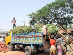 Backpacken Bangladesh markt st martins island
