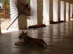 Bagan tempel honden