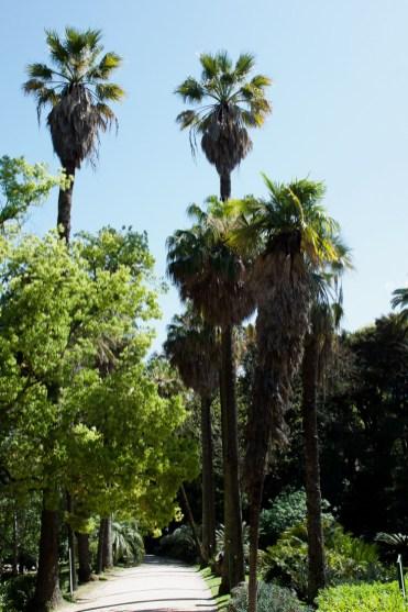 Botanische tuin in lissabon-2
