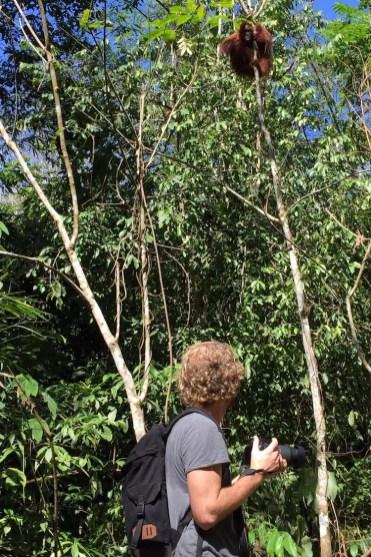 Bukit Lawang op zoek naar orang oetans sumatra