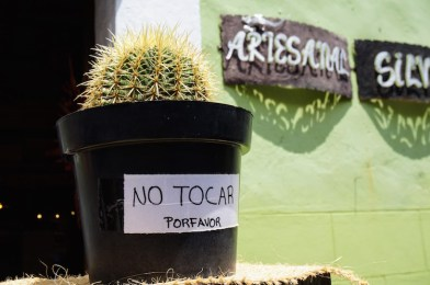 Cactus puebla mexico