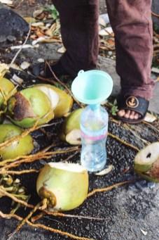 Creools eten kokosnoot water Guadeloupe