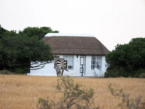 De Hoop collection cottages zebra