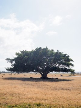 De Hoop meeting tree