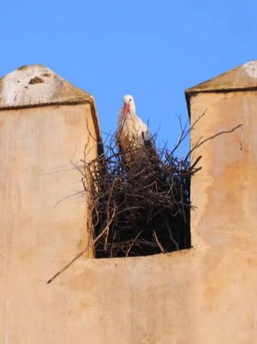 Doen in omgeving marrakech marokko