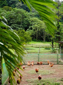 El Silencio lodge spa Costa Rica moestuin-3