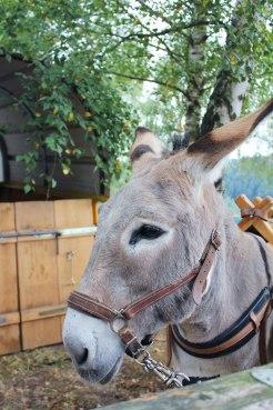 ezels-wandeling-frankrijk-vogezen