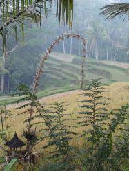 Gunung Kawi Ubud rijstveld
