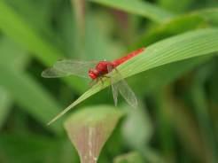Insecten-Inle-Meer