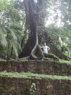 Jungle Palenque in mexico bomen