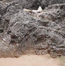 Koraal in stenen bij shete boka curacao