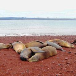 Luieren op het rode strand van Rabida