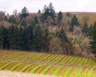 McMinnville wijngaarden USA