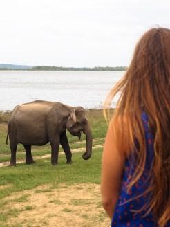 Minneriya-National-Park-vanuit-jeep-olifanten
