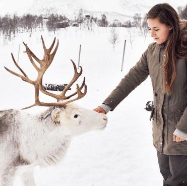 Noord noorwegen rendieren