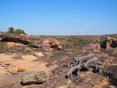 Omgeving bushmans kloof wildlife reserve