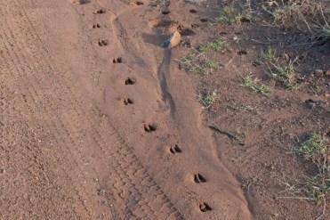 PIlanesberg Zuid Afrika baby voetstappen
