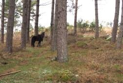 Vale de Poldros paarden
