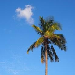 Palmbomen nassau strand