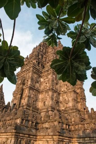 Prambanan tempel yogyakarta vanaf boom