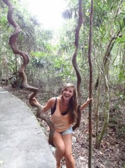 Tour door het dantree rainforest australie