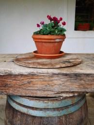 Vipava wine tilia