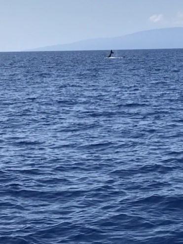 Walvissen spotten in Hawaii