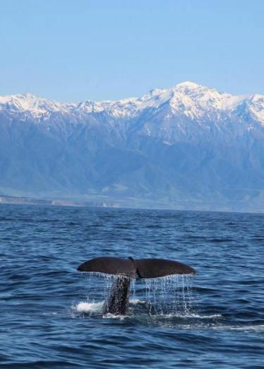 Walvissen spotten nieuw zeeland tips