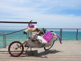 Wat te doen in Tel Aviv naar strand-3