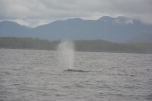 West Canada walvissen spotten Tofino
