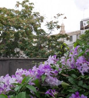 bloemen catania sicilie