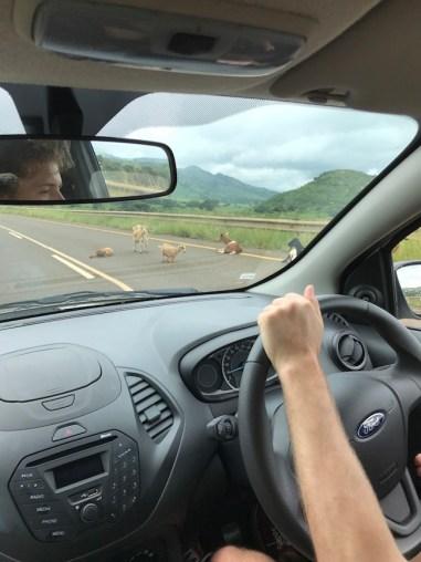 geiten snelweg