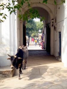 india koe straatje dorp