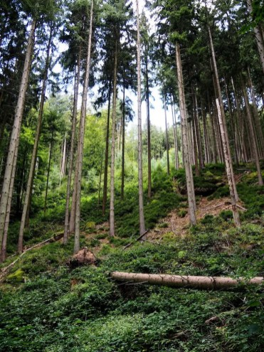 mooie bossen in luxemburg