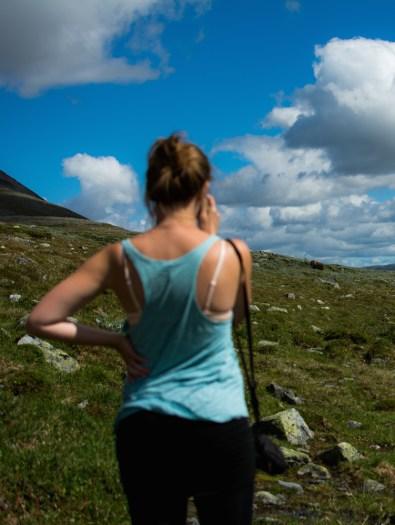 muskusos safari in noorwegen