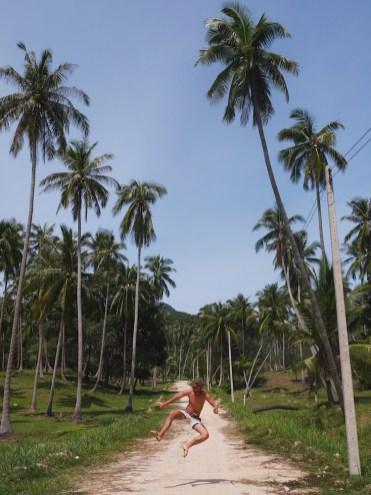 palmbomen in thailand koh phangan