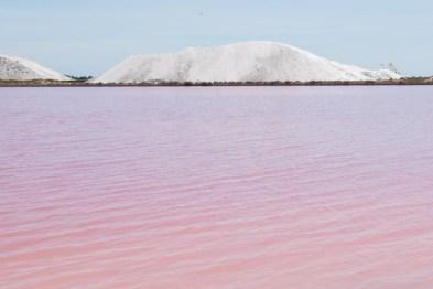 roze meer frankrijk salins aigues mortes-2
