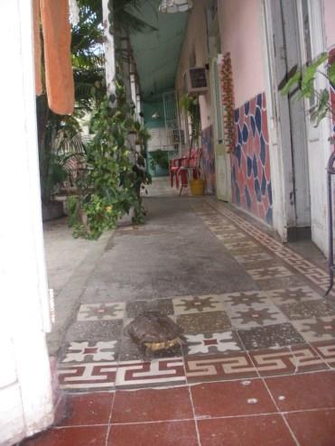 Casa particulares santiago de Cuba