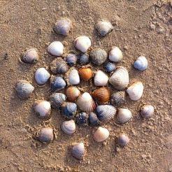 Strandwandeling texel