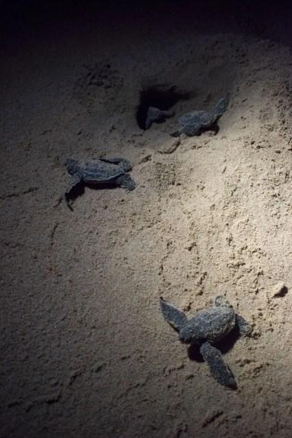turtle tour zuid afrika schildpadden