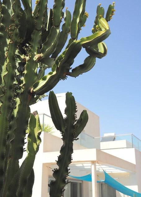 villa-yuna-ibiza-cactus-tuin