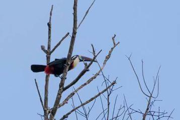 vogels in jungle suriname