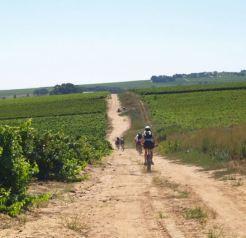 wijnland zuid afrika