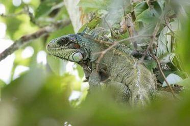 wildlife jungletocht suriname