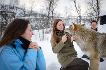 wolven noorwegen kussen