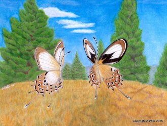 """Gold Drop Helicopus Butterflies Colored Pencils on Bristol Paper, 8"""" x 10"""""""