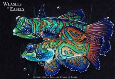 """""""Mandarin Fish"""" Colored Pencil"""