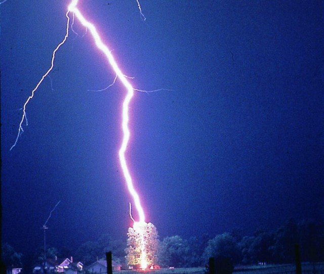 Lightning Hits Tree